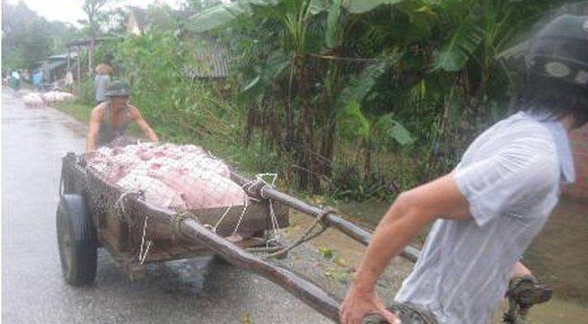 Cận cảnh người dân miền Trung vật lộn với lũ cứu tài sản, gia súc, gia cầm