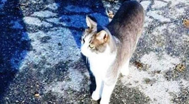 Chú mèo quanh quẩn bên mộ chủ hơn 1 năm
