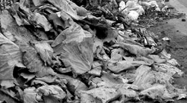 Hà Nội: Rác thải ngập tuyến đường gom