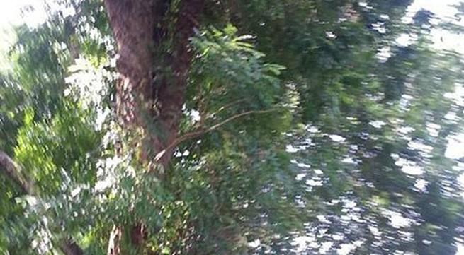 Đang đi đường, bị cành cây rơi trúng đầu tử vong ngay tại chỗ