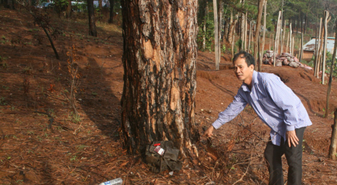 Bị sét đánh khi nghe điện thoại dưới gốc cây