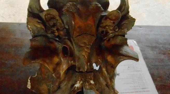 Phát bệnh vì tìm thấy hộp sọ 'Ngưu ma vương'