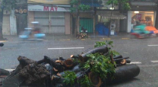 Mưa lớn, cây đổ, một người chết trên phố Hà Nội