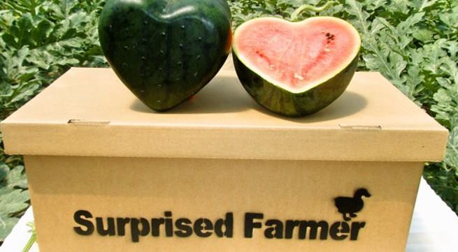 Ngắm những quả dưa hấu hình trái tim tuyệt đẹp đầu tiên trên thế giới