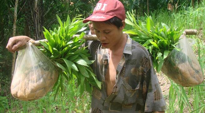 """Ngày đầu cha con """"người rừng"""" lên rẫy trồng keo"""