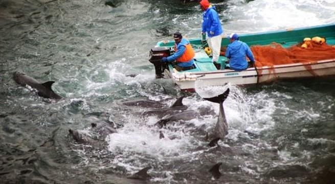 Hãi hùng nước chuyển sang màu đỏ vì thảm sát cá heo