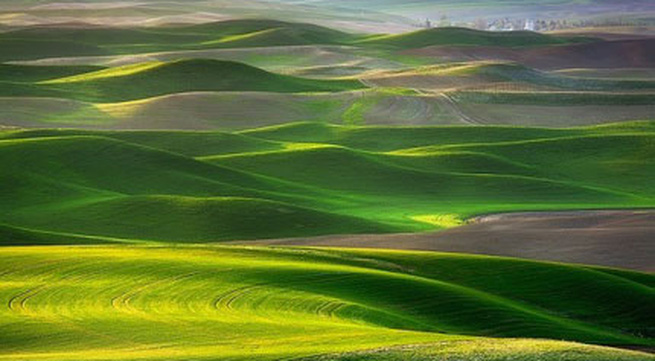 """Ngắm những thảo nguyên xanh """"bất tận"""" trên khắp thế giới"""