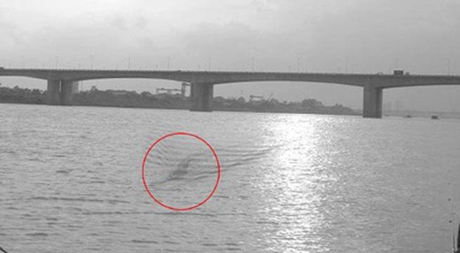 """""""Quái vật"""" dài 40m bơi ở sông Hồng?"""