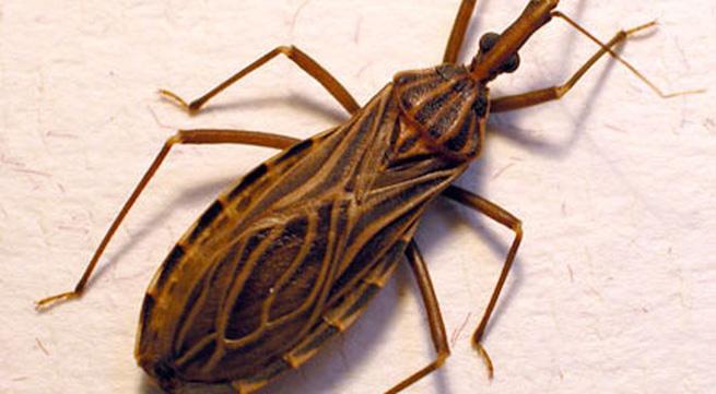 Xử lý khi bị côn trùng đốt: Không nên gãi nhiều