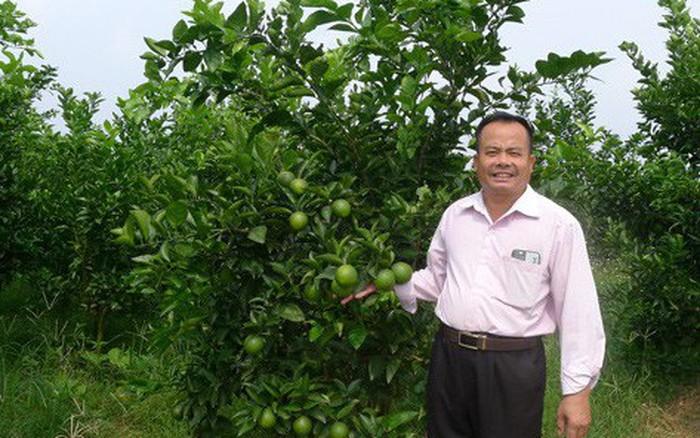 Bỏ chuối trồng cam VietGAP, người đàn ông Hà thành thu nhập 14 tỷ đồng/năm