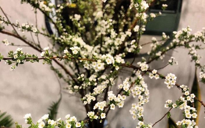 Bí quyết lựa chọn 4 loại hoa ngoại được chị em ưu chuộng nhất dịp Tết: Tuyết mai, Thanh liễu, Hồng gai và... - xổ số ngày 13102019