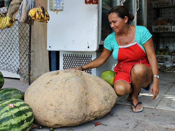 Bà Rosaneida Pereira de Oliveira là chủ nhân của củ khoai tây nặng 80 kg