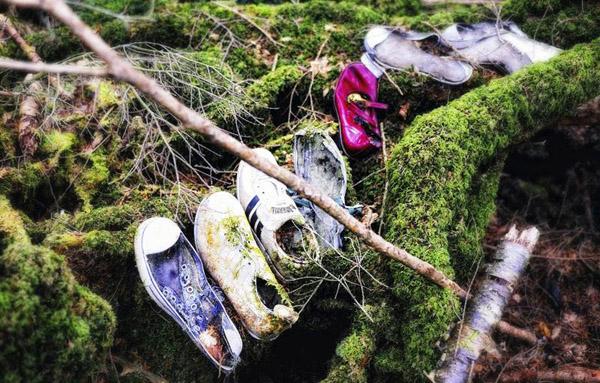 Hãi hùng thám hiểm ngôi rừng nghìn người tự sát ở Nhật Bản