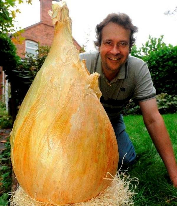 Củ hành của anh Glover. Anh bắt đầu trồng hành tây vào tháng Mười năm ngoái trong nhà kính.Nguồn: Cascade News