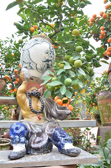 Quất được nhà vườn trồng trong những chiếc chum, chậu rất đa dạng về hình thức