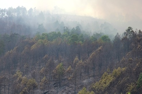 Đám cháy thiêu hủy nhiều ha rừng