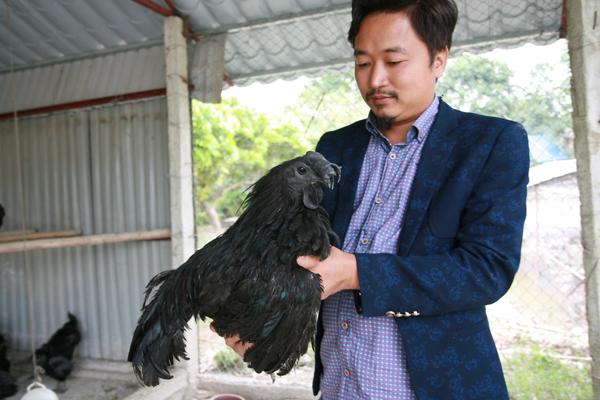 Anh Trần Nhữ Giáp cho biết, phải mất 6 lần lặn lội sang Indonesia anh mới mang về được đúng giống gà đen mặt quỷ thuần chủng.