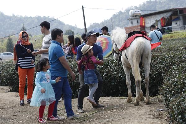 Dịch vụ cho thuê ngựa cưỡi lúc nào cũng đắt khách.