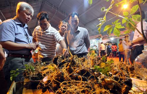 Đầu tháng 3/2017, Quảng Nam tổ chức hội chợ sâm Ngọc Linh tại huyện Nam Trà My, thu hút hơn 13.000 lượt người tham quan. Người dân địa phương bán ra khoảng 200 kg sâm thu về 12,5 tỷ đồng. Ảnh: Đắc Thành