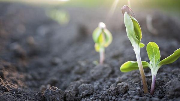 Hãy cùng tham khảo 3 loại phân ủ hữu cơ với cách làm đơn giản dưới đây.