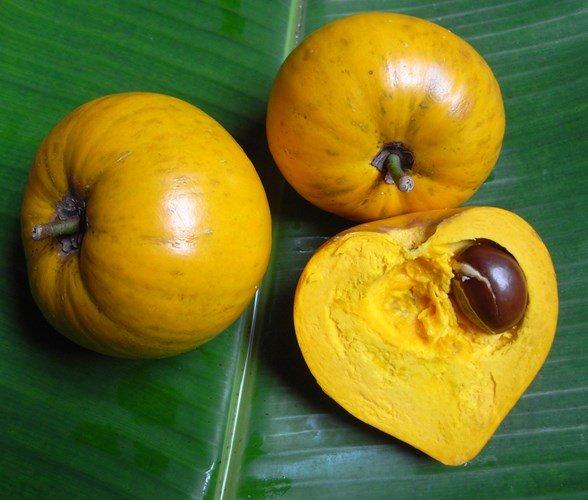 Tại Việt Nam, quả trứng gà (lê ki ma) lại để rụng và được nhiều người cho rằng, không có giá trị kinh tế - Ảnh Người nhà quê.