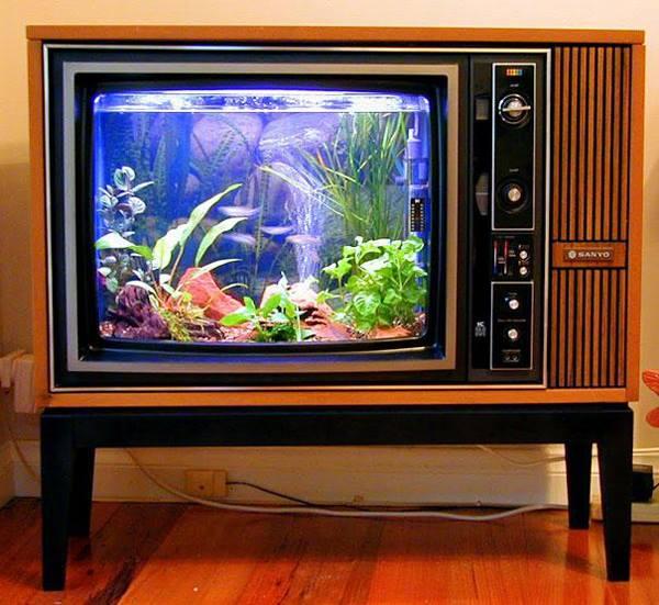 Nét như...tivi bể cá! Nếu bạn yêu thích những chú cá bé xinh trong căn nhà, hãy tận dụng chiếc tivi đen trắng thời ông bà anh để nuôi cá nhé!