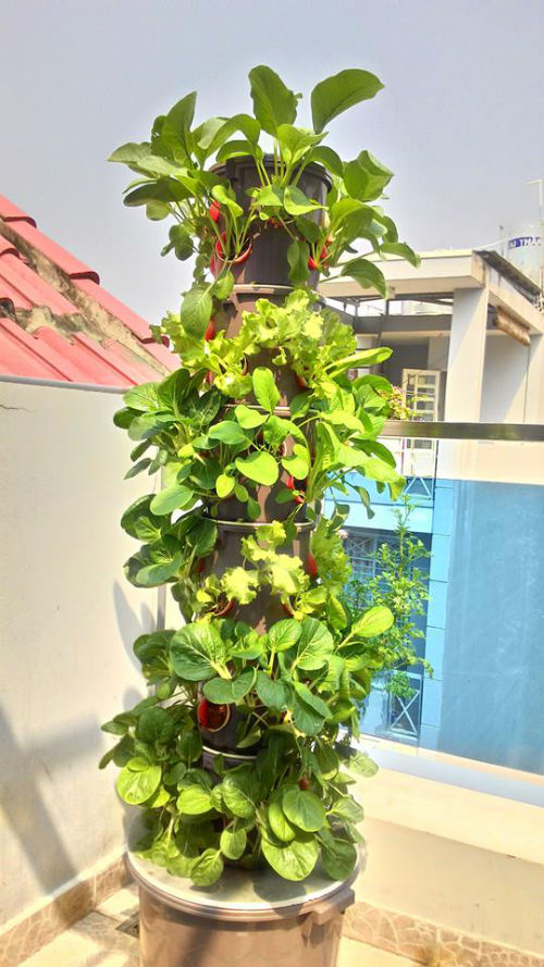Cuối năm 2013, anh Nguyễn Thành Khôi bắt đầu trồng rau quả bằng phương pháp thủy canh.