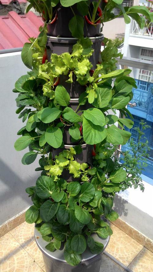 Chỉ một tháp đứng, anh Khôi có thể kết hợp trồng nhiều loại rau cải khác nhau