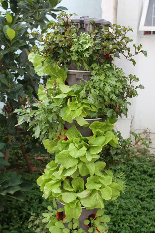 Tháp đứng thủy canh vừa tiết kiệm diện tích, vừa không tốn nhiều công chăm sóc như trồng rau thông thường