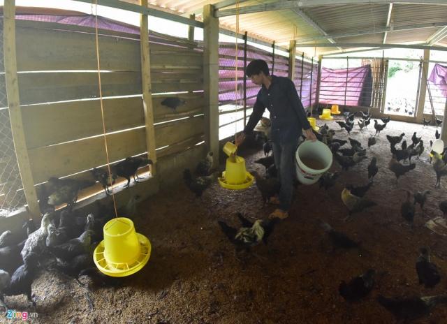 Do có kiến thức về thú y nên trang trại nuôi gà của Công khá ổn định, 4 tháng xuất chuồng một lứa. Với giá 150.000 đồng/kg, Công thu lãi khoảng 30-40 triệu đồng/lứa.