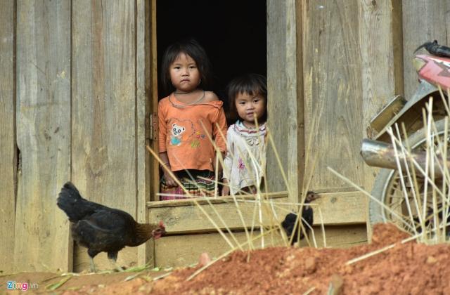 Những người Mông nơi đây không biết giống gà đen này có từ bao giờ, bởi từ lúc họ sinh ra đã thấy gà đen chạy tung tăng ở ngoài sân.