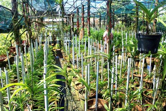 Vườn hoa nhà Lâm Khánh Chi nom không khác gì trang trại.
