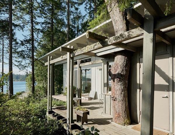 Thiết kế thân thiện với thiên nhiên cho phép các cây có thể mọc xuyên qua nhà