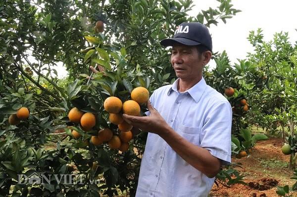 Theo ông Chất, để thành công trong trồng cam, đòi hỏi người trồng phải tâm huyết và thương xuyên cập nhật những bí quyết trồng cam trên các phương tiện truyền thông