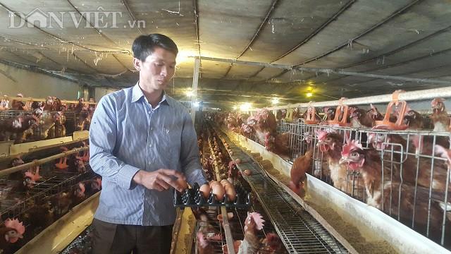 Nhờ nuôi 40.000 con cả gà và lẫn vịt mà mỗi năm anh Hồng lãi gần 4 tỷ