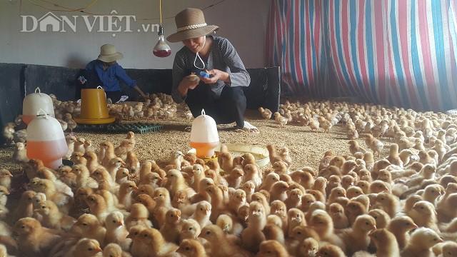 Hiện trang trại của Hồng đang tạo công ăn việc làm thường xuyên cho 15 lao động với mức lương từ 4 đến 6 triệu đồng/người/tháng và hơn 30 lao động thời vụ.