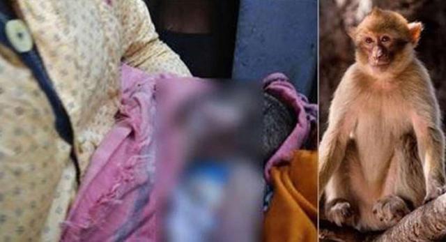 Bé trai sơ sinh đã tử vong dưới giếng sâu sau khi bị khỉ bắt cóc.