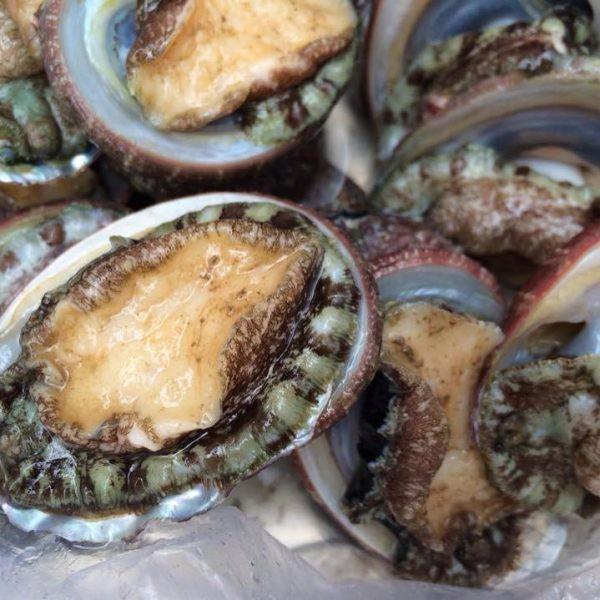 Đặt biệt, bào ngư có thể chế biến được rất nhiều món ăn ngon thượng hạng, là đặc sản được vua chua và quý tộc ngày xưa rất thích thưởng thức….