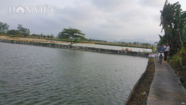 Mô hình nuôi cá rô đầu vuông của Trần Quang Đạo được đầu tư bài bản.