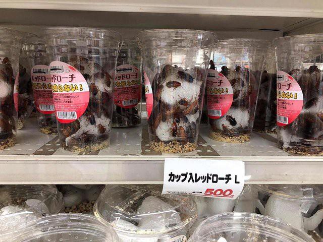 Gián đất ở Nhật Bản được bày bán trong siêu thị với giá 500 Yên/hộp