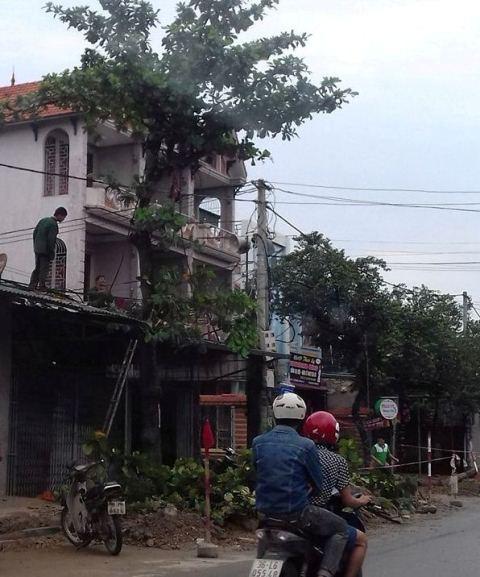 Người dân chặt tỉa cây trước giờ bão đổ bộ