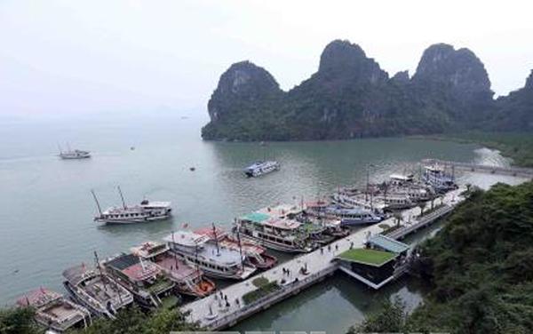 Khu neo đậu tàu du lịch vào hang Đầu Gỗ, vịnh Hạ Long, Quảng Ninh.     Ảnh: Quang Quyết