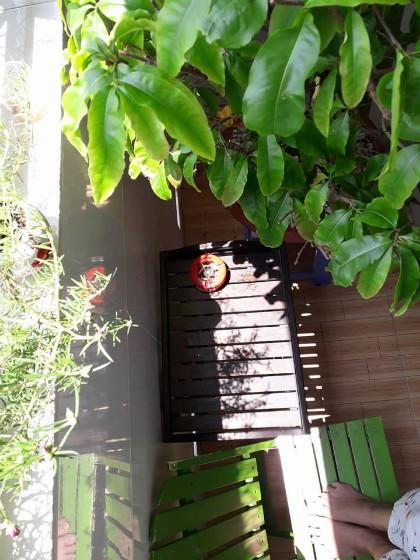 Ban công chị đặt vài cây đơn giản để có thể đọc sách, thư giãn, thay vì trồng rau hay hoa như nhiều người. Ảnh: Hạnh Nguyễn.