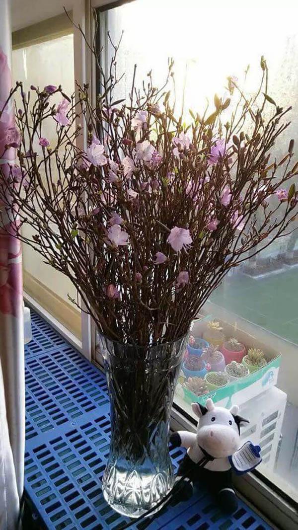 Hiện nay, theo khảo sát của PV ở một số nguồn bán hoa đỗ quyên khô online, giá một bó hoa dao động từ 75.000- 175.000 đồng/bó có từ 20 - 50 cành. Một số nơi tách bó và bán riêng từng cành cho khách dễ chọn số lượng, giá 5.000 - 7.000 đồng/cành.
