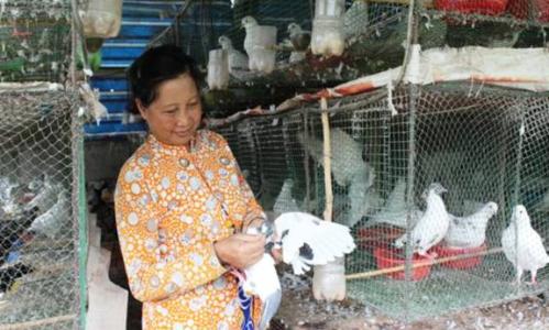 Trang trại nuôi chim nhà anh Minh.