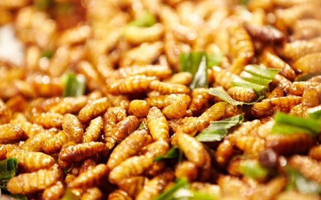 Những cấm kỵ khi ăn nhộng tằm cần phải biết để tránh rước bệnh vào thân - Ảnh 1.