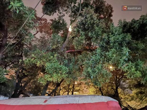 Hà Nội: Giải cứu người đàn ông nằm vắt vẻo trên cây giữa đêm - Ảnh 2.