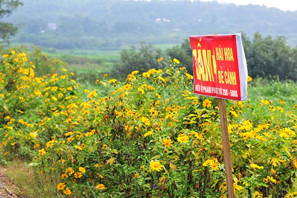 Đẹp đến không tưởng tượng nổi con đường hoa dã quỳ dưới chân núi Ba Vì - Ảnh 7.