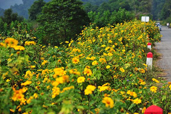 Đẹp đến không tưởng tượng nổi con đường hoa dã quỳ dưới chân núi Ba Vì - Ảnh 6.