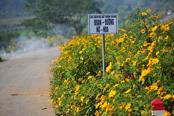 Đẹp đến không tưởng tượng nổi con đường hoa dã quỳ dưới chân núi Ba Vì - Ảnh 1.